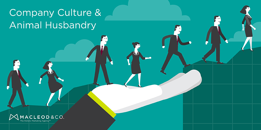 Company Culture & Animal Husbandry | Macleod & Co. The Holistic Marketing Agency ™