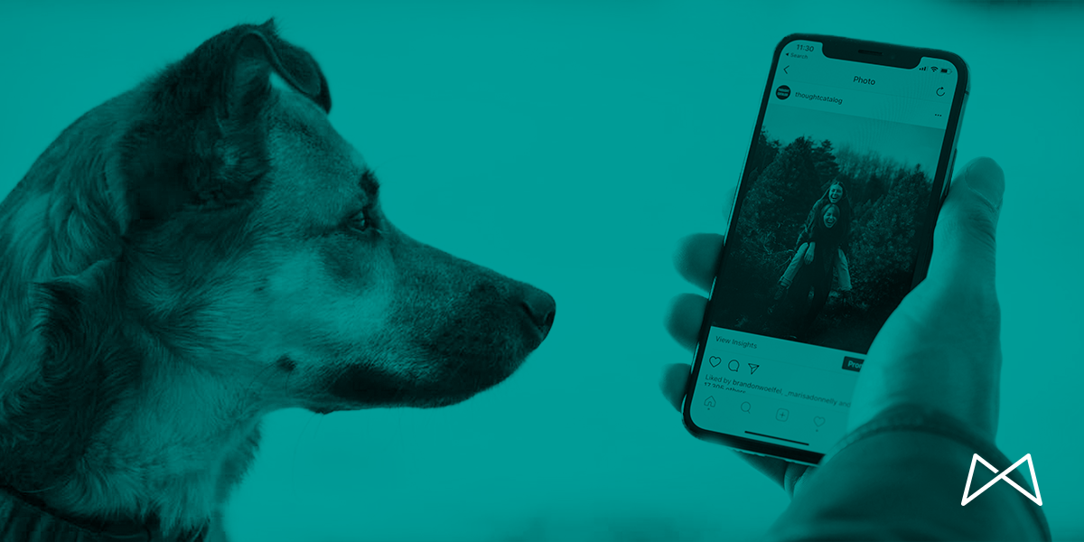 4 Things My Dog Taught Me About Social Media | Macleod & Co. | Minneapolis Marketing Agency